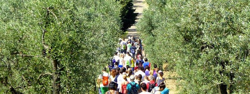 Trekking Excursions